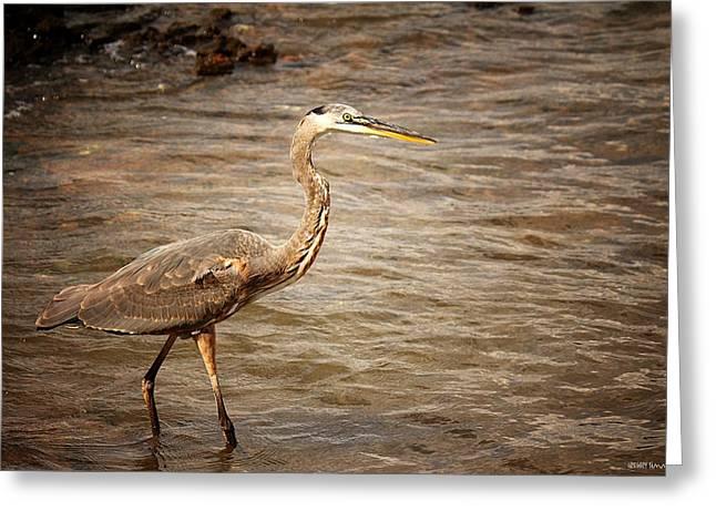 Heron At The Lake Greeting Card by Greg Simmons