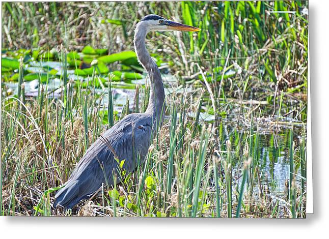 Heron By The Riverside Greeting Card