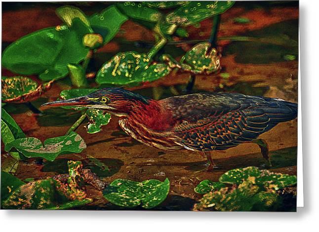 Heron Hdr Greeting Card by Travis Burgess