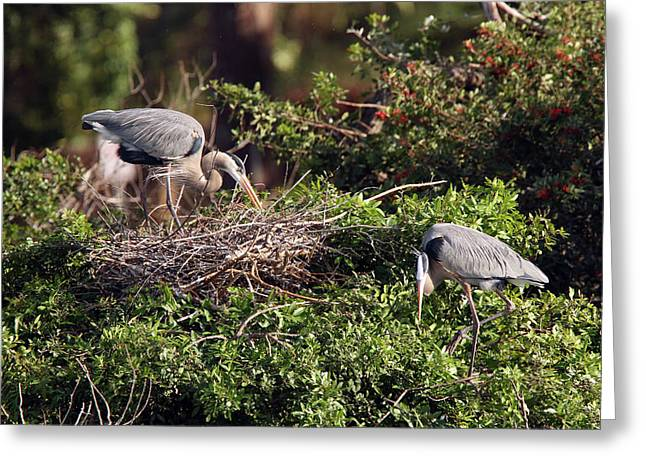 Heron Home Building Greeting Card by David Yunker