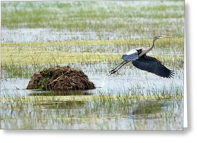 Heron Hut Flight Greeting Card by David Yunker