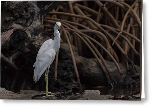 Heron In Disguise Greeting Card by Debra Larabee