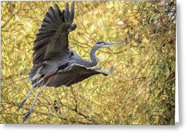 Heron In Flight Greeting Card