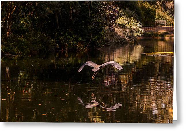 Heron In Flight Greeting Card by Zina Stromberg