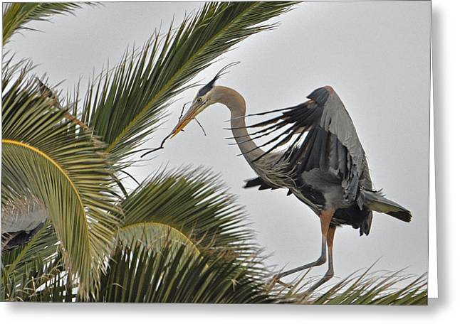Heron In The Palm Greeting Card