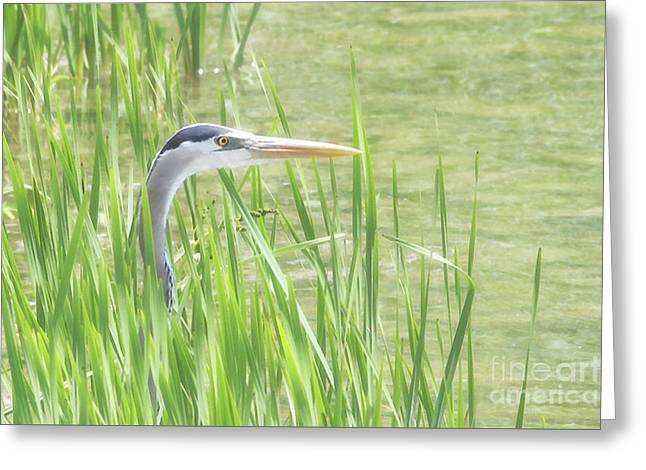 Heron In The Reeds Greeting Card by Anita Oakley