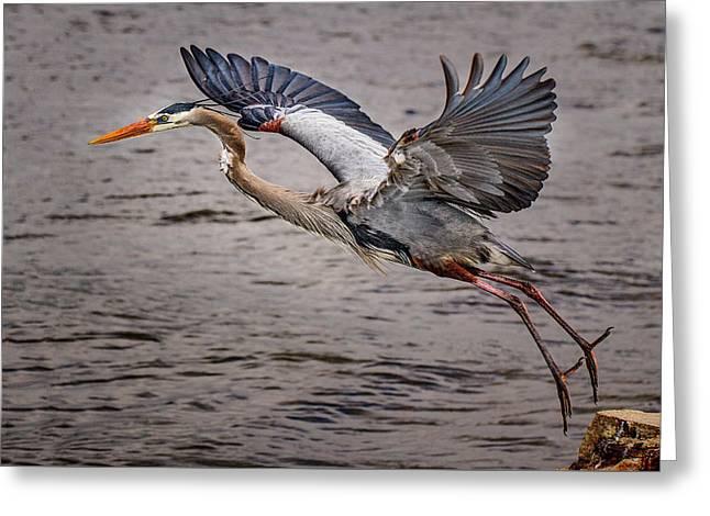 Heron Lift Off Greeting Card