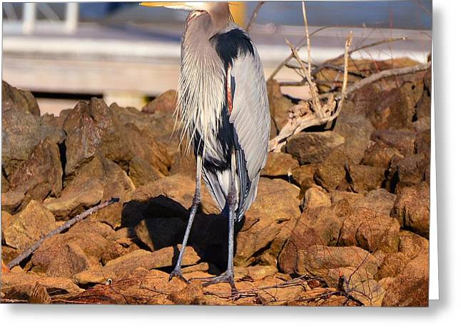 Greeting Card featuring the photograph Heron On The Rocks by Lisa Wooten