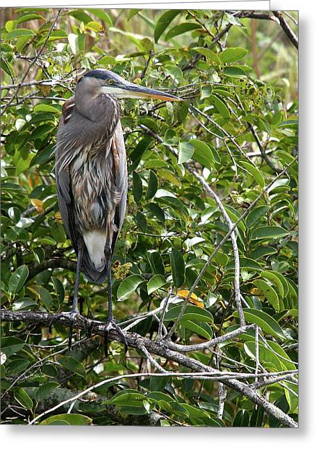 Heron Outlook Greeting Card by Christiane Schulze Art And Photography