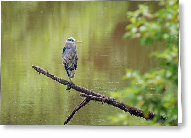 Heron Over Water Greeting Card by Loree Johnson