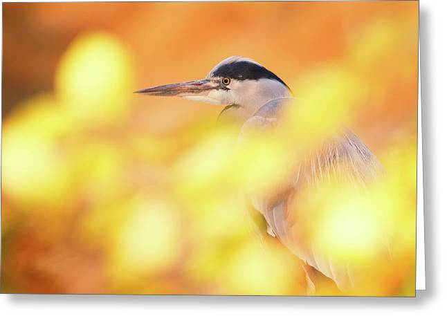 Hidden Heron Greeting Card by Roeselien Raimond