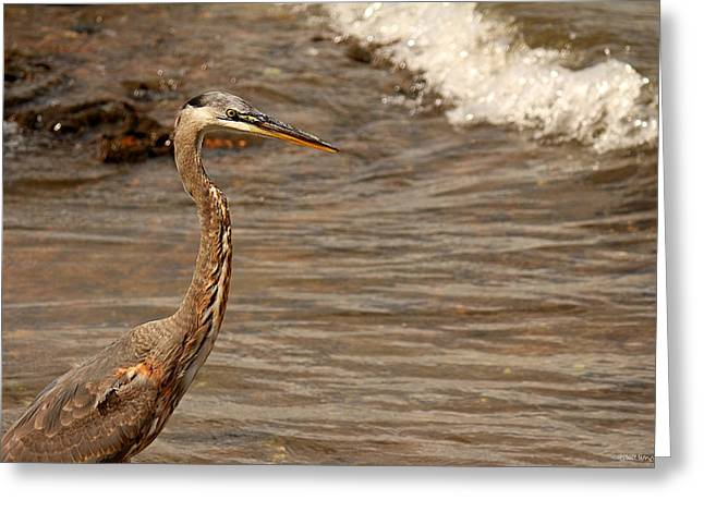 Heron Supper Greeting Card by Greg Simmons