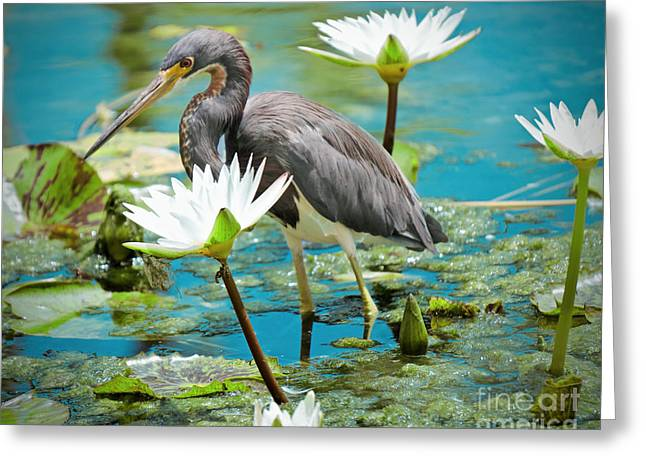 Heron With Water Lillies Greeting Card