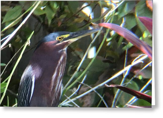 Heron With Yellow Eyes Greeting Card
