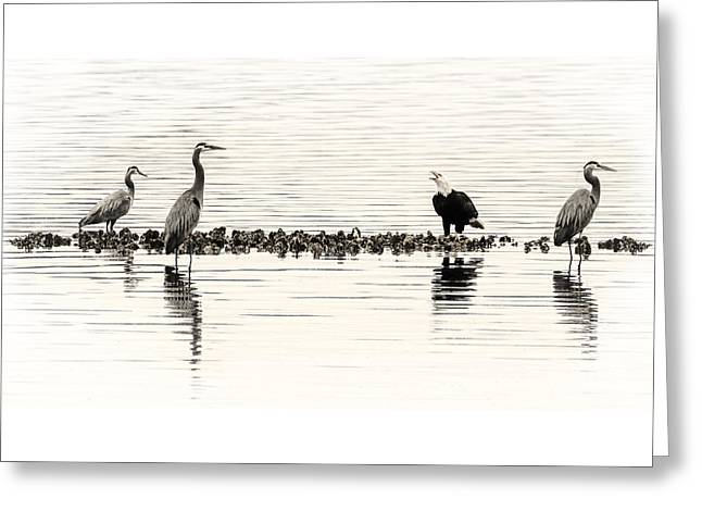 Herons And Eagles And Oysters Oh My D3163 Greeting Card by Wes and Dotty Weber