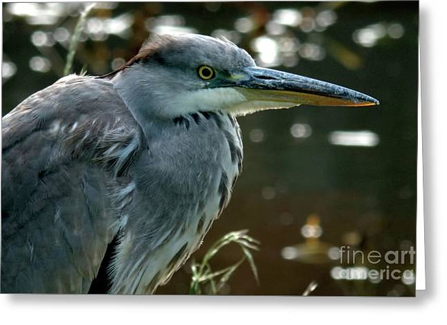 Herons Looking At You Kid Greeting Card