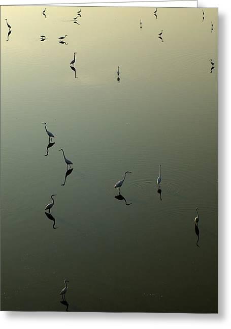 Herons On Lake 367 Greeting Card