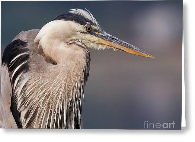 Herons Pause Greeting Card