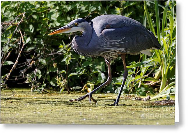 Greeting Card featuring the photograph Herons Pond by Sue Harper