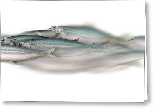 Herring School Of Fish - Clupea - Nautical Art - Seafood Art - Marine Art - Game Fish Greeting Card