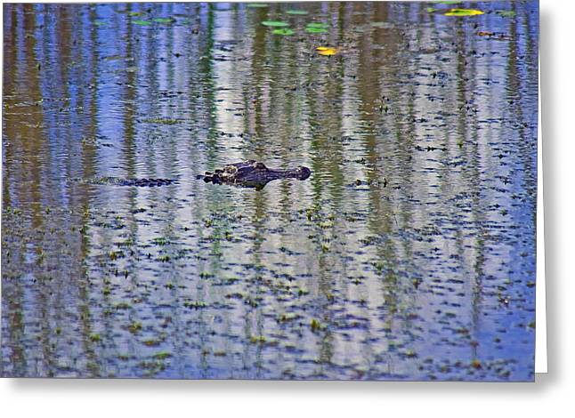 He's Happy Floating Greeting Card by Robert Brown