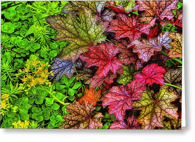 Heuchera And Sedum Greeting Card by Dennis Lundell
