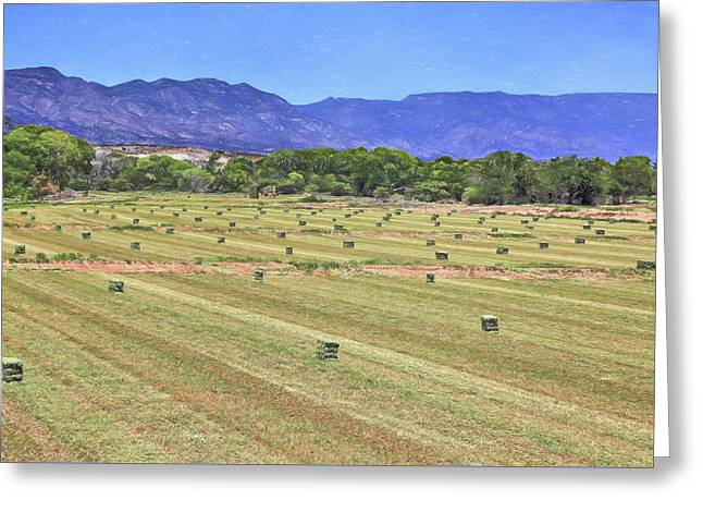 Hey Hay Greeting Card by Donna Kennedy