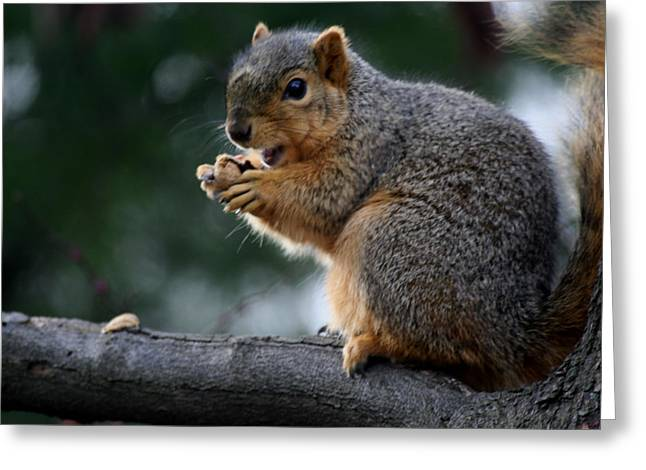 Hey  The Guy With Peanuts Greeting Card by Martin Morehead