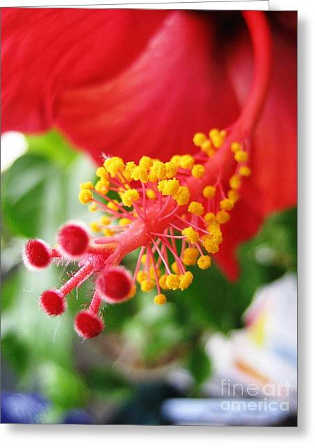 Hibiscus #3 Greeting Card