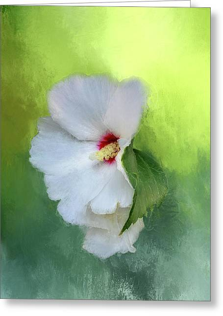 Hibiscus Abstraction Greeting Card