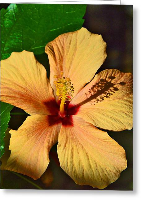 Hibiscus. Greeting Card by Andy Za