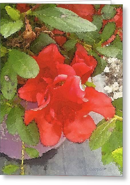 Hibiscus B Greeting Card