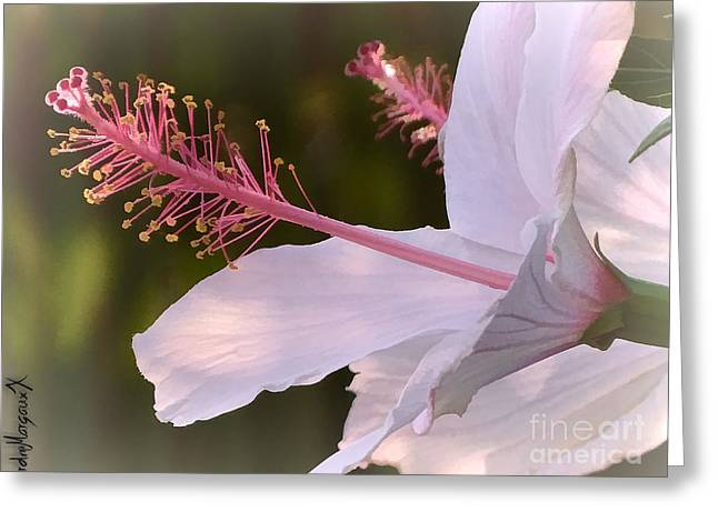 Hibiscus Bloom Pastel Greeting Card by Rdm-Margaux Dreamations