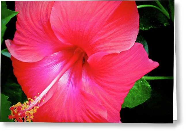 Hibiscus Blossom Greeting Card by Tony Grider