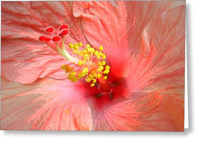 Hibiscus Central Greeting Card