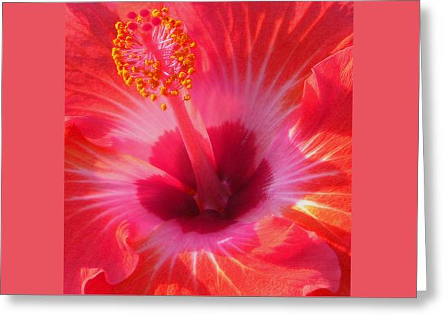 Greeting Card featuring the photograph Hibiscus - Coral And Pink Square by Kerri Ligatich
