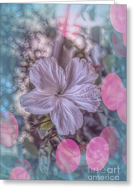 Greeting Card featuring the photograph Hibiscus by Elaine Teague
