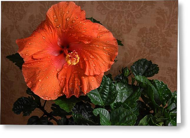 Hibiscus Fine Art Greeting Card