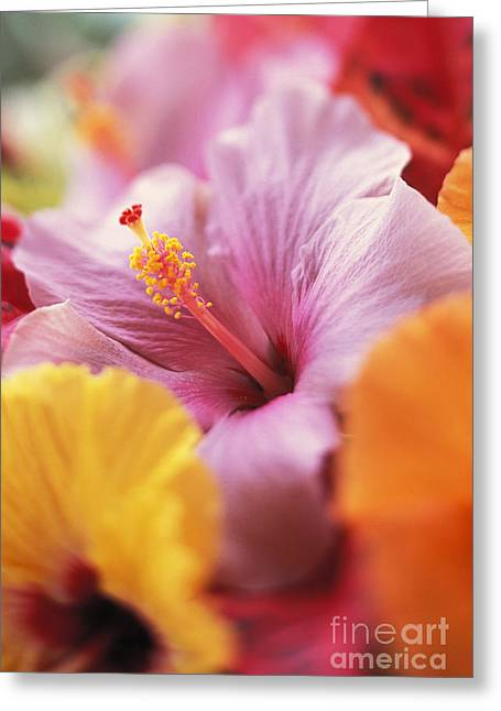 Hibiscus Flower Arrangement Greeting Card by Kyle Rothenborg - Printscapes