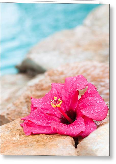 Hibiscus Flower Greeting Card by Amanda Elwell