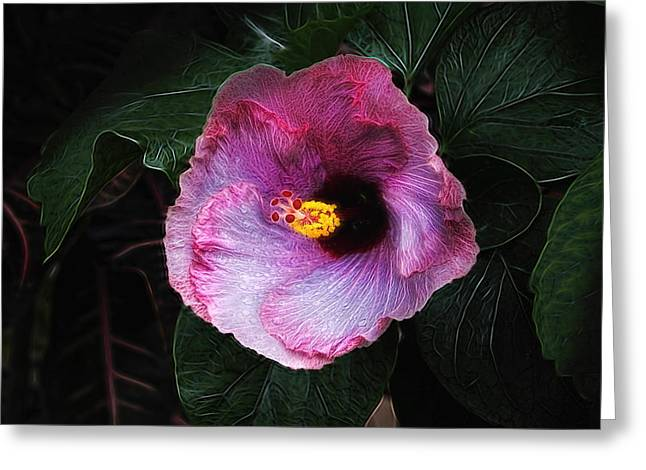 Hibiscus Flower Greeting Card by Tom Mc Nemar