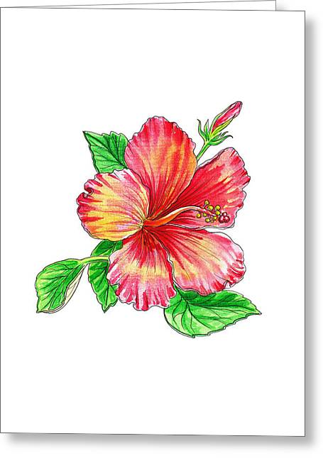 Hibiscus Flower White Background Greeting Card