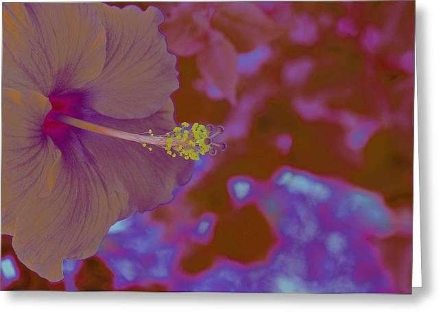 Hibiscus Gllow Greeting Card by Lucrecia Cuervo