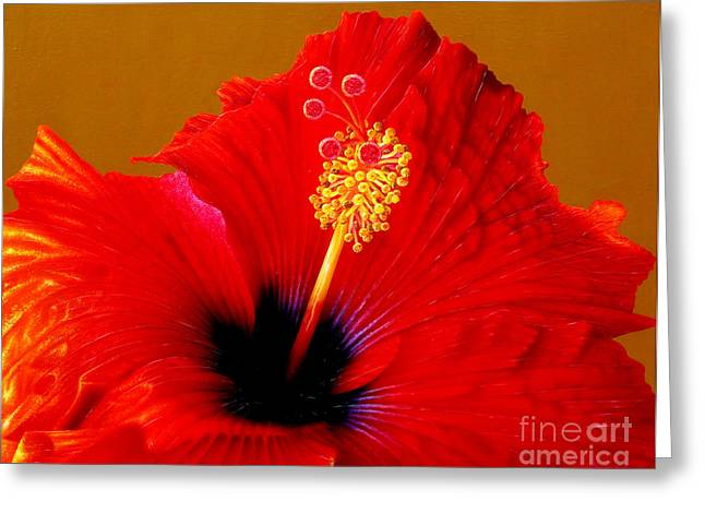 Hibiscus Greeting Card by Jurek Zamoyski