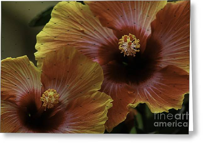 Greeting Card featuring the photograph Hibiscus by Lori Mellen-Pagliaro