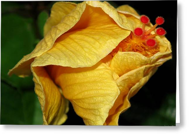 Hibiscus Profile Greeting Card by JoAnn Lense