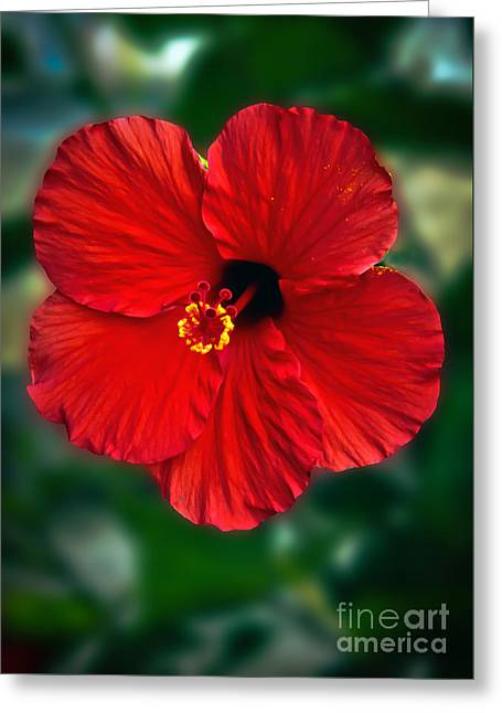 Hibiscus Greeting Card by Robert Bales