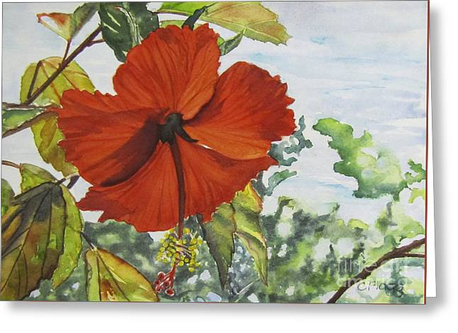 Hibiscus St Thomas Greeting Card
