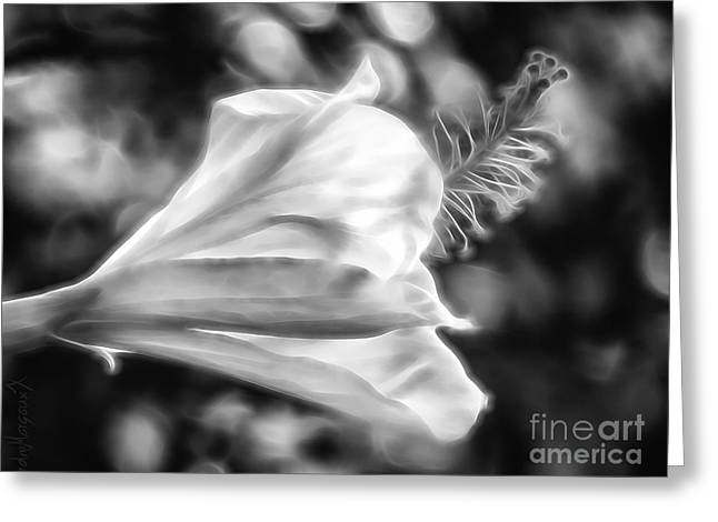 Hibiscus Unfolding Bw Greeting Card by Rdm-Margaux Dreamations