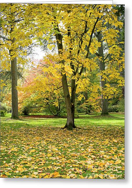 Hickory Autumn Greeting Card